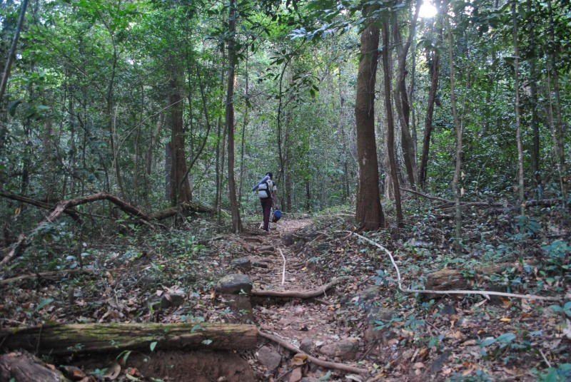 Kumara Parvatha trek route inside forest