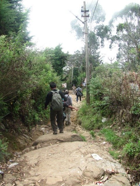 Kodai trek trail: Rocky trek trail to Dolphin's nose