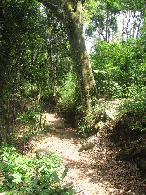 Kodaikanal to Kumbakarai falls trek  :Trek trail after Vellagavi, So much green in summer !!!